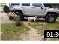 狗狗总在汽车轮胎上撒尿,对轮胎的伤害到底有多大? (28播放)